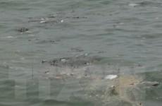 Hỗ trợ hơn 50 tỷ đồng cho các tỉnh thiệt hại vì xâm mặn và cá chết
