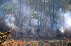 Quảng Ngãi chưa khống chế được cháy rừng thông và keo tại Sơn Hà