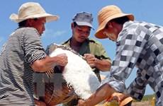 Công bố kết quả kiểm nghiệm độ an toàn của muối ở tỉnh Hà Tĩnh
