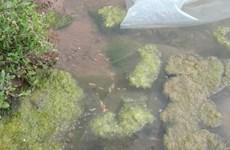 Cấp 120 tấn hóa chất phòng, chống dịch bệnh thủy sản cho ba tỉnh