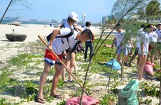 Thanh niên kiều bào hăng hái trồng cây ven biển giữa trời oi bức