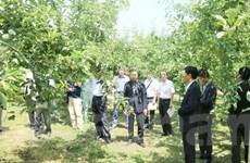 Tỉnh trồng táo lớn nhất Nhật Bản hợp tác với các địa phương Việt Nam