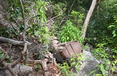 Ba cán bộ bị kỷ luật vì để lâm tặc khai thác gỗ với số lượng lớn