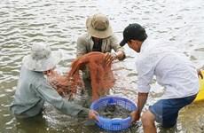 Xem xét khởi tố vụ giả giấy tờ kiểm định sản phẩm thức ăn thủy sản