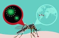 Chính phủ Thái Lan bác bỏ thông tin dịch Zika đang lan rộng