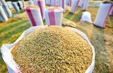 Campuchia đầu tư 300 triệu USD xây dựng kho dự trữ lúa gạo