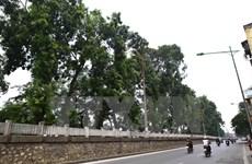 Hà Nội đặt hàng các chuyên gia thiết kế trồng cây xanh trên địa bàn