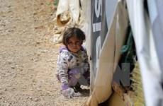 Mỹ tuyên bố viện trợ nhân đạo cho Syria thêm 364 triệu USD