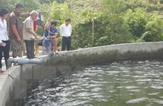 Điều tra, làm rõ nguyên nhân khiến cá chết bất thường ở Sa Pa