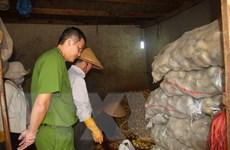Đình chỉ cơ sở biến rau củ Trung Quốc thành nông sản Đà Lạt