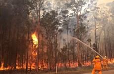 Australia: Hơn 40 đám cháy rừng xảy ra tại bang New South Wales