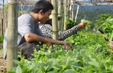 TP.HCM xúc tiến đầu tư các khu nông nghiệp công nghệ cao mở rộng