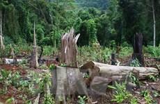 Đắk Nông điều tra, xử lý vụ phá rừng, lấn chiếm đất ở Tuy Đức