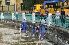 Hà Nội công bố 4 nguyên nhân gây ra hiện tượng cá chết hàng loạt
