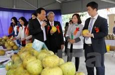Yên Bái: Đặc sản bưởi Đại Minh có giấy chứng nhận nhãn hiệu