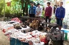 Tây Ninh: Tạm giữ 6 nghi phạm bắt trộm 47 con chó trong một đêm