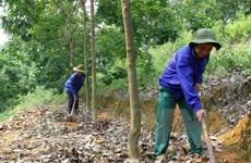 Việt Nam đẩy mạnh phát triển các dự án cao su tại Campuchia