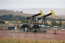 Chuyên gia dự báo giá xăng dầu sẽ tăng mạnh trong năm 2017