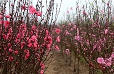 Nhật Bản: Cộng đồng người Việt tại Kansai vui mừng đón Xuân