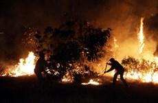 """Thảm họa cháy rừng tại Chile """"chưa từng có trong lịch sử"""""""