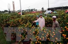 Người Đà Nẵng rộn ràng đón Tết, thành phố ngập tràn sắc Xuân