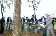 Bí thư Hà Nội: Việc bảo vệ cây xanh chưa được quan tâm đầy đủ