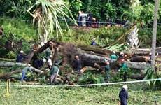 Đổ cây di sản tại Vườn bách thảo Singapore, 5 người thương vong