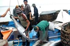 Bị áp thuế cao, cá ngừ Việt Nam mất lợi thế ở thị trường Nhật Bản