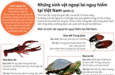 [Infographics] Những sinh vật ngoại lai nguy hiểm tại Việt Nam