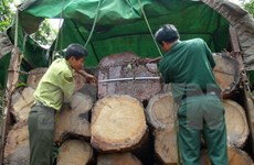 Công an Quảng Ngãi bắt giữ xe chở 20 tấn gỗ không rõ nguồn gốc