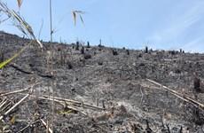 Hàng chục hecta rừng tự nhiên tại Đắk Nông bị tàn phá, đốt trụi