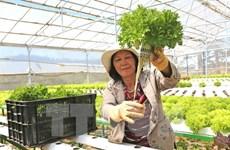 Đầu tư cho nông nghiệp sạch: Không làm ào ạt theo phong trào