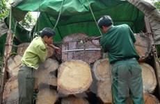 Nam Định bắt giữ xe chở gỗ quý không có hóa đơn chứng từ