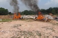 Bắc Ninh: Tiêu hủy 265 bánh ma túy vật chứng của vụ án Tàng Keangnam