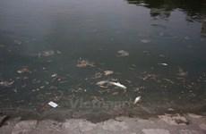 Hà Nội: Cơ bản không còn hiện tượng cá chết ở hồ Hoàng Cầu