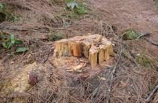Công an Lâm Đồng bắt nhiều đối tượng trong băng nhóm phá rừng