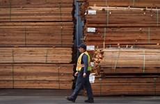 Bộ Thương mại Mỹ áp thêm thuế chống phá giá với gỗ mềm Canada