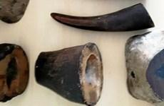 Cảnh sát Đức bắt giữ một người Việt vì buôn sừng tê giác và ngà voi