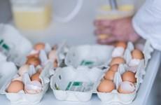Bulgaria thu giữ 1 tấn bột trứng bị nhiễm fipronil xuất xứ từ Đức