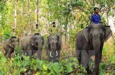 Quyết định thành lập Khu bảo tồn loài và sinh cảnh voi tại Quảng Nam