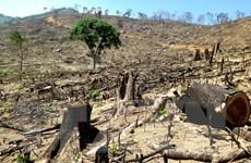 Vụ phá gần 44ha rừng tại Bình Định: Lại đổ lỗi cho địa hình phức tạp