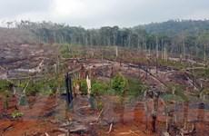 Đắk Nông: Kiến nghị điều tra việc phá hơn 53ha rừng ở xã Quảng Sơn