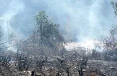 Nghệ An: Cháy rừng lim trên 10 năm tuổi tại thị xã Hoàng Mai