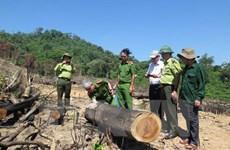 Vụ phá 43,7ha rừng tự nhiên ở Bình Định: Tìm thấy gỗ tang vật
