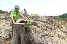 """Đắk Nông kỷ luật 2 chủ tịch xã để xảy ra """"điểm nóng"""" về phá rừng"""
