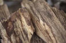 Một người Việt bị bắt ở Thái Lan vì khai thác trầm hương trái phép