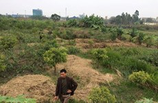 Hà Nội: Nguy cơ phá hủy di chỉ khảo cổ học Vườn Chuối ở Hoài Đức