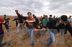 Số người Palestine bị thương gia tăng do đụng độ với binh sỹ Israel