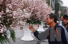 Trao Kỷ niệm chương tặng Chủ tịch Hiệp hội Hoa anh đào Nhật Bản
