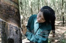 Doanh nghiệp Việt Nam giúp các địa phương Lào giảm đói nghèo